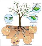 بررسی-میزان-تاثیر-گیاه-پالایی-در-حذف-آلاینده-ها
